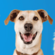 Petco Grooming Referral Discount Vouchers