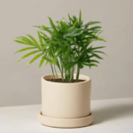 The Sill Live Plants Discount Code